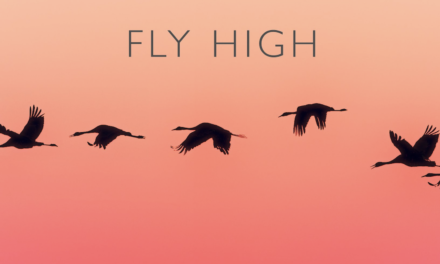 "Ooberfuse – Brand new single ""Fly High"" featuring JVNR – Out now"